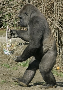 Gorilla delivering an Easter basket. Hopefully he'll replace the ...